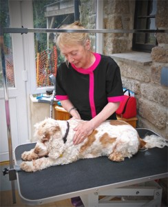Caroline Sargent Dog Grooming in Sancreed